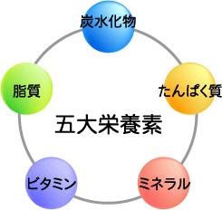 ミネラルは五大栄養素の中心 | ...